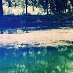 Sago-Pond Weed